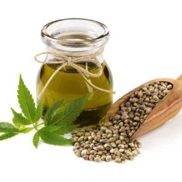 Konopljino olje in blagodejni vpliv na zdravje