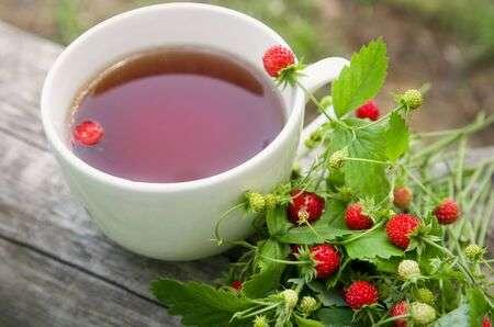 Gozdna jagoda – slastni sadež za zdravje