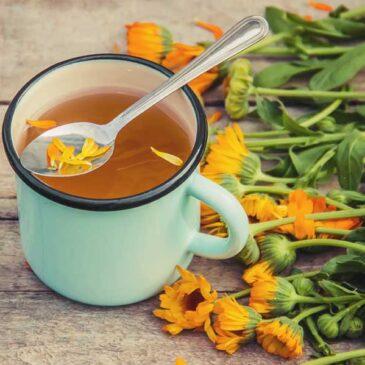 Kako uporabljamo ognjičev čaj?