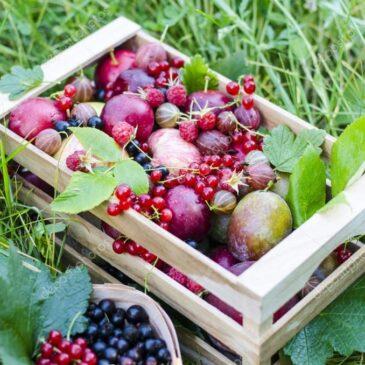 Sadje – zdravilni pripravki iz sadja